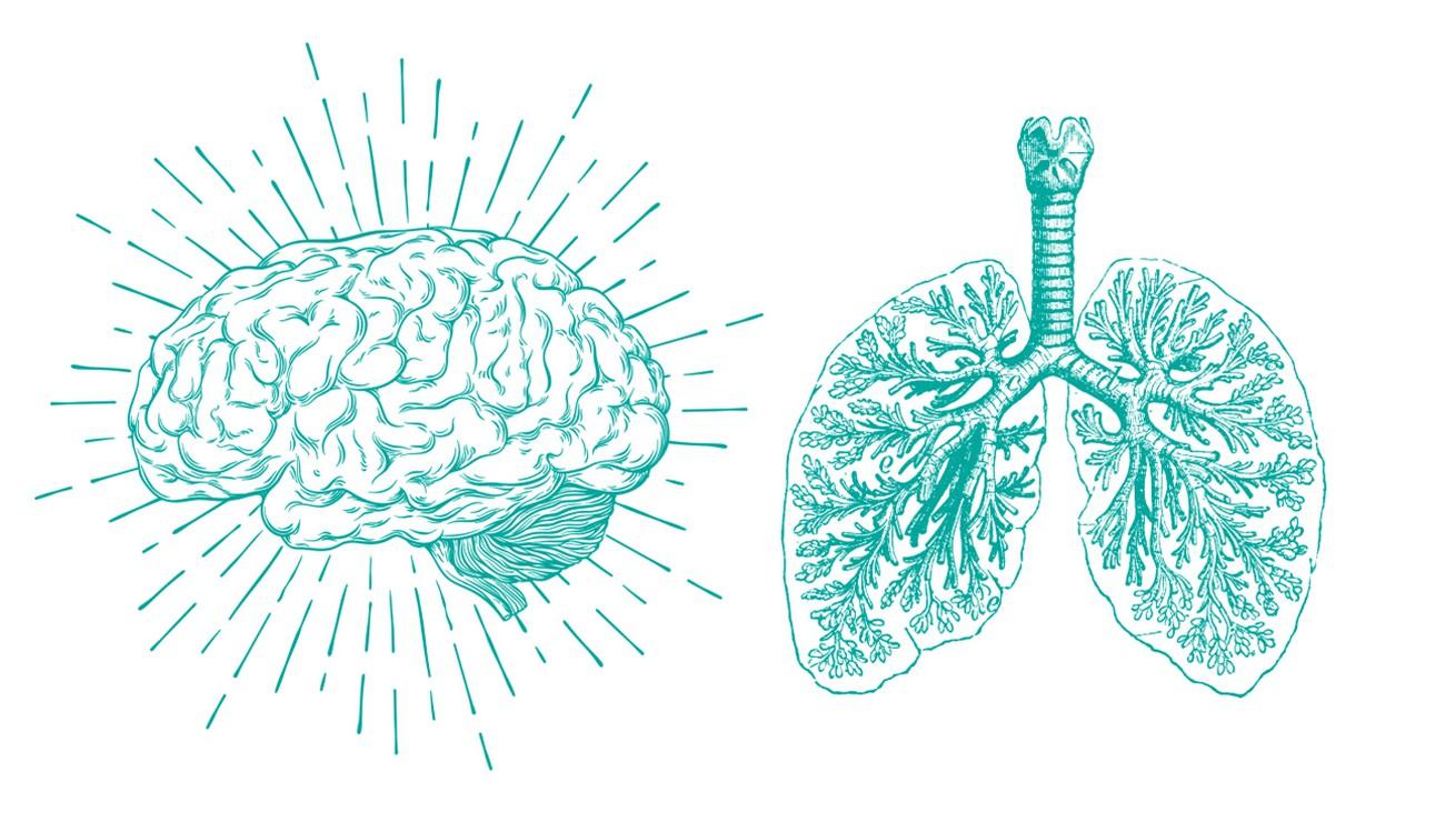 cerveau poumons
